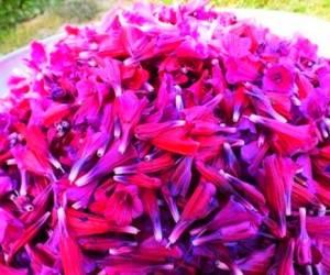 خواص گل گاوزبان